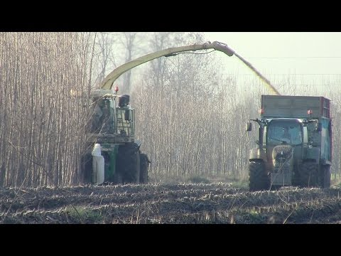 WOOD CHIPPING: KRONE Big X 700 and 2x NEW Fendt in Italy | 2014