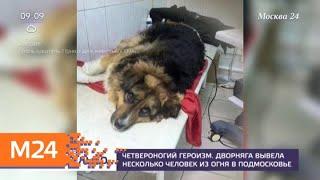 Волонтеры спасают бездомную собаку в Подмосковье - Москва 24