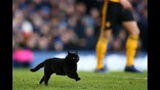 Everton vs Wolves match reaction