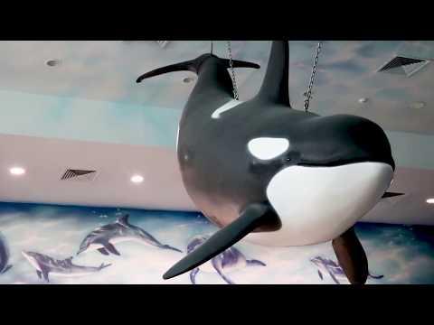 Dubai Dolphinarium : 10th Year Anniversary Preparation
