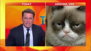Американский ведущий не сдерживает  эмоции от взгляда кота
