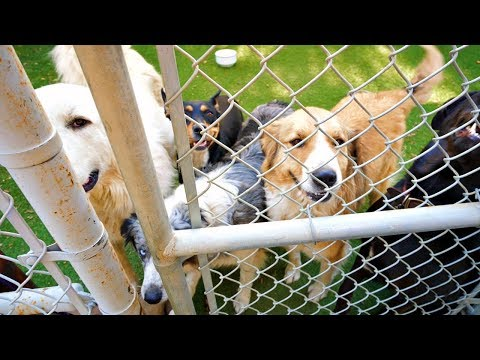 Animal Rescue Saves Dogs From ...