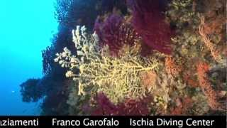 Video Il Mare di Ischia - R.Rinaldi - full movie download MP3, 3GP, MP4, WEBM, AVI, FLV Mei 2018