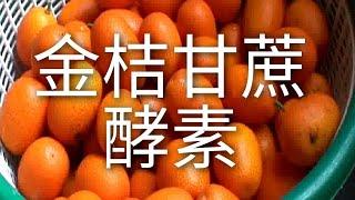 金桔甘蔗酵素 - 水酵素和濃酵素的簡易做法