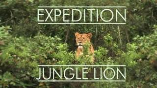 African Lions Discovered In Jungle Of Southern Ethiopia RainForest. - የአፍሪካ አንበሶች በደቡብ ኢትዮጵያ ሬን ፎረስት