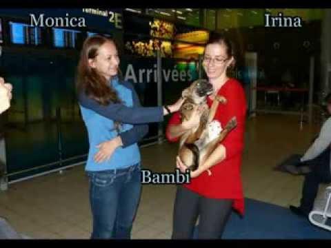 21 septembre 2013 : Abel Bambi Booba Bambitza Lea Netty
