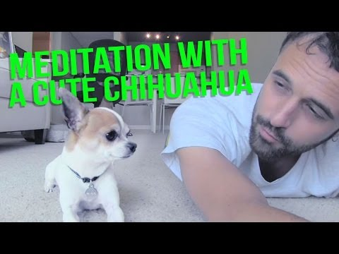 Meditation with a cute chihuahua