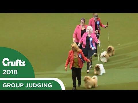 Breeders Competition | Crufts 2018