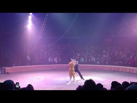 Kangaroo Boxer fight.Кенгуру Боксёр