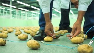 Электричество из картошки