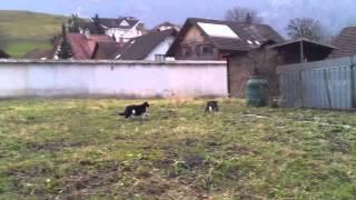 Animal Porn (Cats)