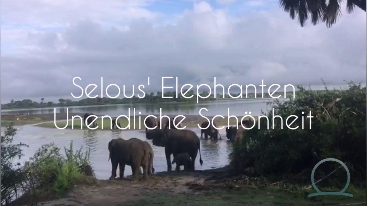 Kraftplatz Impression Selous' Elephanten, Tansania
