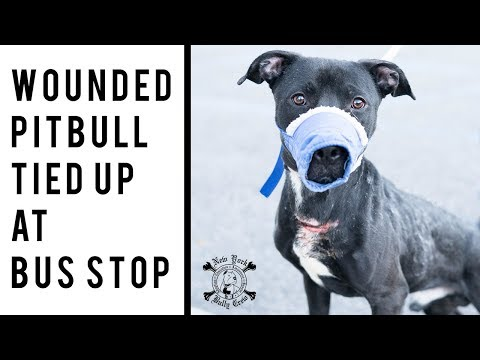 Wounded Dog Tied Up at Bus Stop | New York Bully Crew
