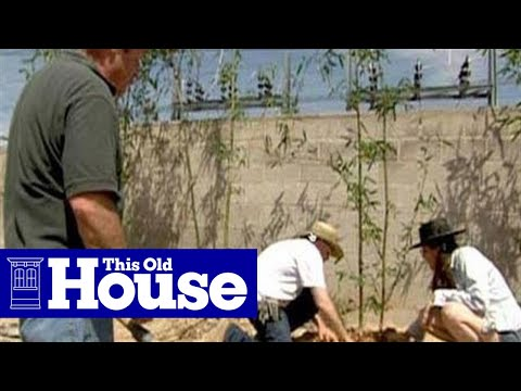 How to Plant a Bamboo Screen - This Old House