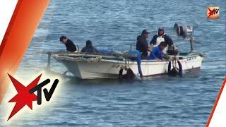 Delfinjagd in Japan: Grausames Ritual - Die ganze Reportage | stern TV (29.01.2014)