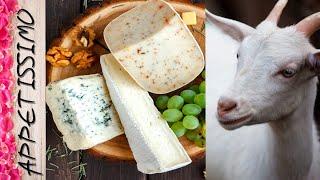 КОЗЬЕ МОЛОКО в сыроделии Сыр творог йогурт из козьего молока рецепт Сулугуни и Моцареллы