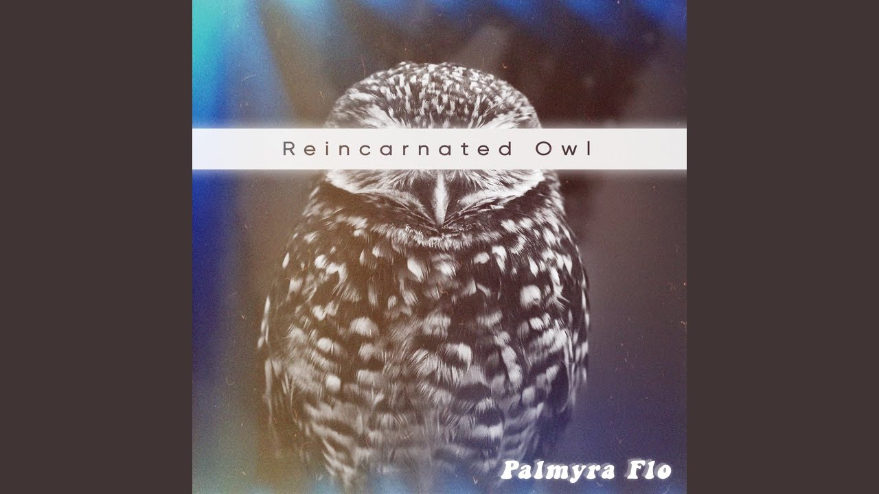 Reincarnated Owl