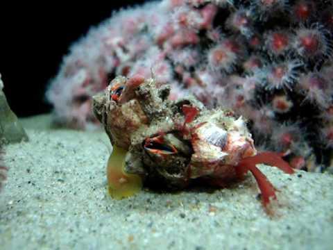 Santa Monica Pier Aquarium - Feeding Barnacles
