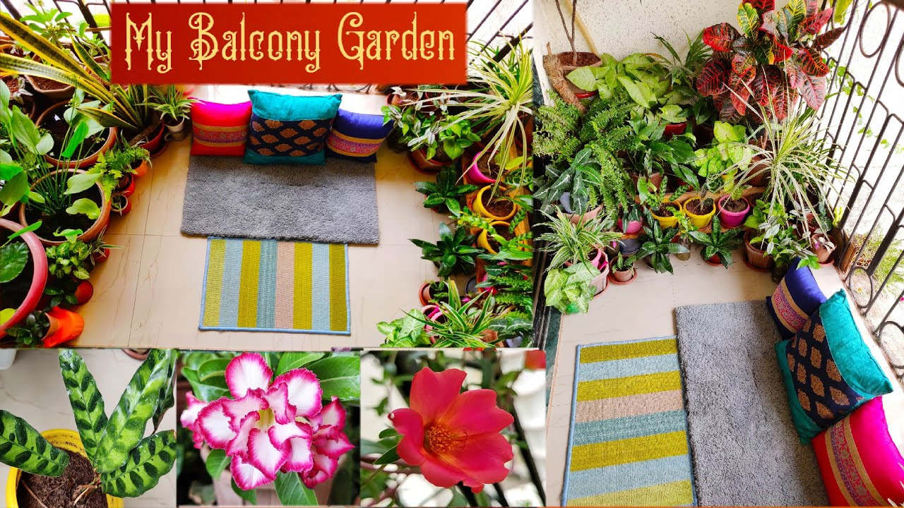 Balcony Garden tour Part -1 || My balcony Garden with plants, Calathea, adenium, portulaca