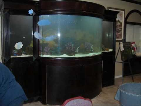 1000 Gallon Aquarium Cleaning Aquatic Empires Youtube