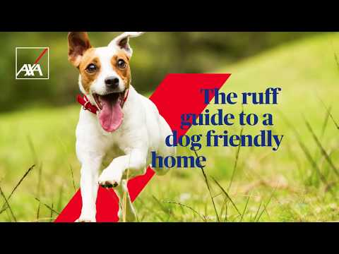 The Ruff Guide to a Dog Friendly Home