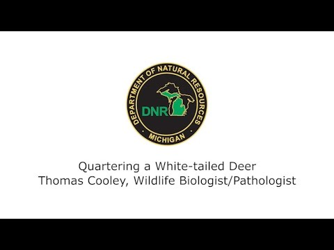 Deer Processing: Quartering A White-tailed Deer