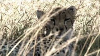 Sun Africa Hotels Corporate Video
