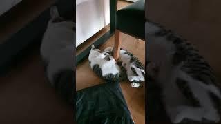 폴리몰리 이야기~♡ 유기묘고양이 두마리 입양 (폴리몰리…
