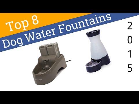 8 Best Dog Water Fountains 2015