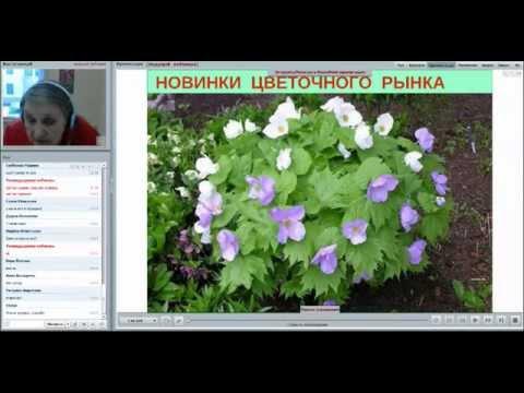 видео: Вебинар Татьяны Шаповал «Новинки цветочного рынка», часть 1