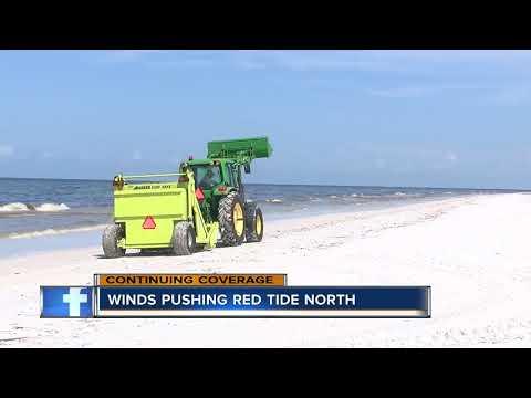 Red tide impacting Longboat Key beaches, killing thousands of fish