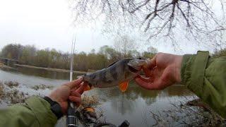 Рыба через заброс Апрельская рыбалка на хищника