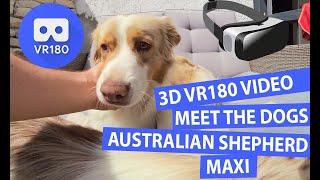 3D Meet the Australian Shepherd Maxi   Meet the Animals [VR180]