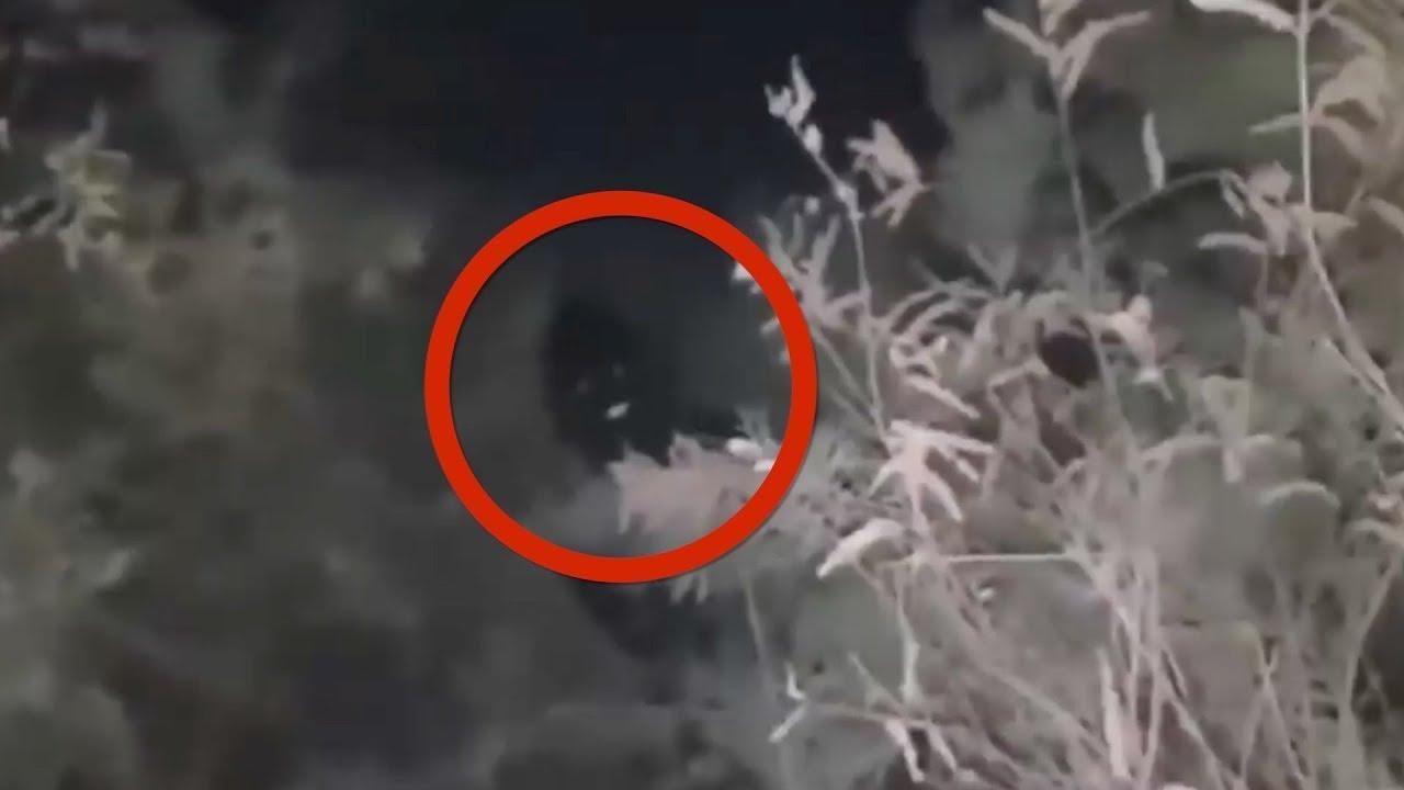Top 5 Criaturas Misteriosas Captadas En Cámara
