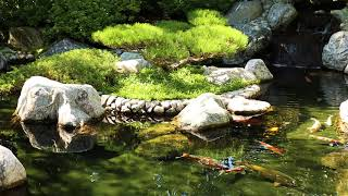 Relaxation - Sounds of Nature - Koi Pond and Waterfall  - 2 Hours screenshot 1