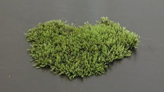Growing Land Moss in Aquarium