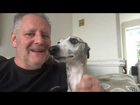 Living with a Whippet