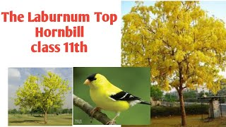 #LearningEnglish The Laburnum Top ..Poem class11th Hornbill Learning English