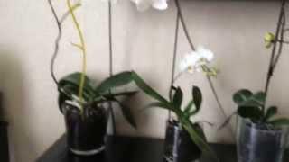 Уход за орхидеями(http://vk.com/club49931384 http://instagram.com/honikowa honikowa@mail.ru., 2014-08-16T12:00:14.000Z)