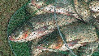 Рыбалка. Ловля толстолоба и крупного карася . My fishing