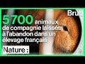 Opération de sauvetage de 5 700 animaux de compagnie dans un élevage français