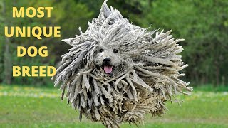 Most Unique Dog Breed In The World ! Top 8 Unusual Look Dog Breed 2020