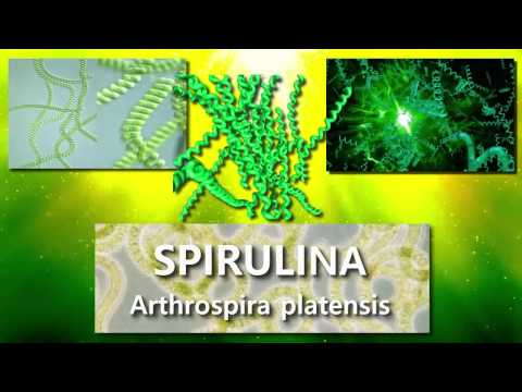 Alga Spirulina Documental   Historia y Beneficios