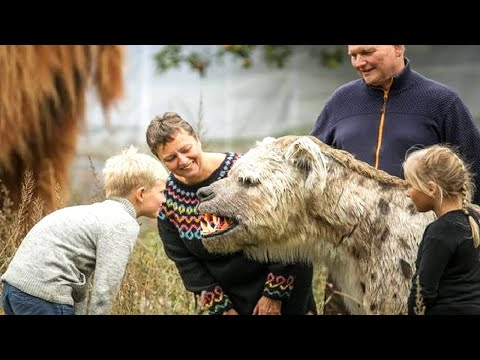 os-animais-de-estimaÇÃo-mais-estranhos-do-mundo