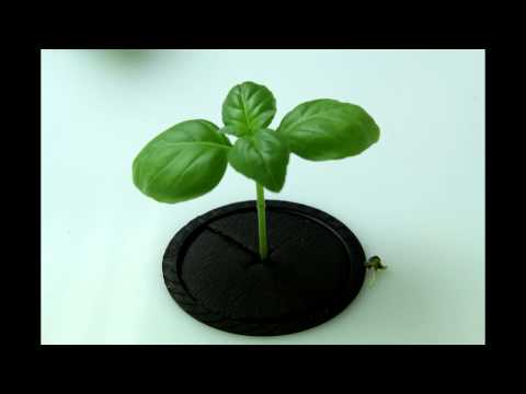 30 Day Basil Time Lapse