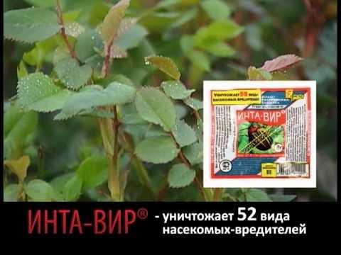 ИНТА-ВИР - средство защиты от вредителей и насекомых