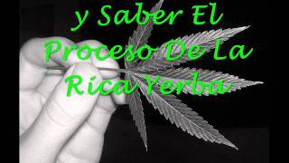 Fumo Weed Poetas Malditos 2011 Lyrics