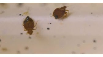 How to Handle a Bed Bug Infestation | Pest Control