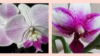ОРХИДЕИ - НОВИНКИ! Фаленопсис Summer Love из посылки и обворожительный Биг Лип!/Orhids Orchid
