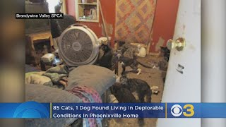 BVSPCA: 85 Cats, 1 Dog Found Living In Deplorable Conditions, Several Layers Of Feces In Phoenixvill